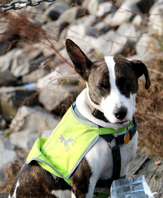 Tasks Service Dogs Perform